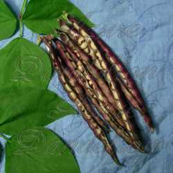 Pink Eyed Purple Hulled Cowpea Seeds Southern Pea