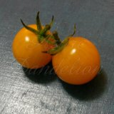 Egg Yolk Tomato Seeds