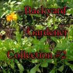 Seed Collection Backyard Gardener Variety Pack 2