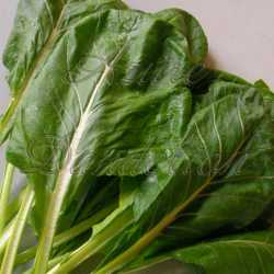 Champion Collards Seeds