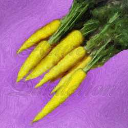 Amarillo Yellow Carrot Seeds