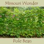 Missouri Wonder Bean Seeds