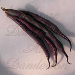 Royal Burgundy Bean Seeds