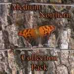 Self Sufficient Medium Northern Seed Collection Pack