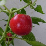 Hot Cherry Pepper Seeds