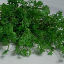 Curly Cress Herb Seeds