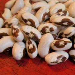 TopNotch Golden Wax Bean Seeds