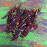 Puya Chile Pepper Seeds
