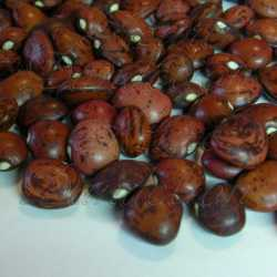 Dixie Butterpea Speckled Lima Bean Seeds