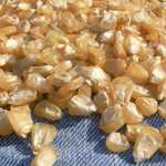 Stowell's Evergreen White Corn Seeds