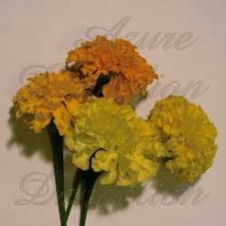 Crackerjack Mix Marigold Flower Seeds