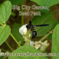 Large City Garden Seeds Collection Pack