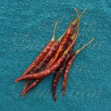 Chile de Arbol Pepper Seeds