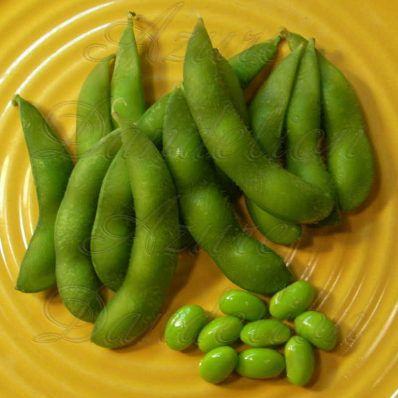 Butterbean Soybean Seeds - Click Image to Close