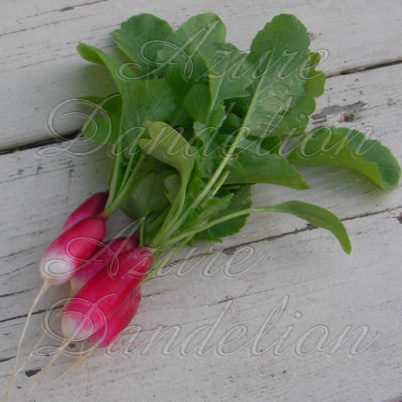 French Breakfast Radish Seeds - Click Image to Close