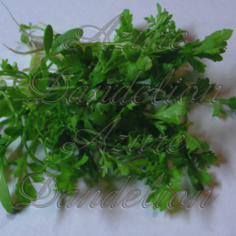 Pepper Cress Herb Seeds - Click Image to Close